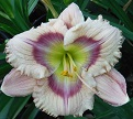 Flourishing Daylilies: Incredible!